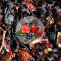 Herbata Owocowa Tarninówka