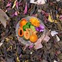 Herbata Zielona Jesienna Aleja