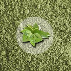 Herbata Zielona Matcha